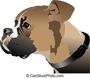 head., boxeur, vecteur, chien, illustration