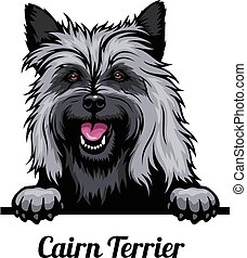 Head Cairn Terrier - dog breed. Color image of a dogs head ...