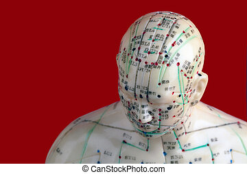 Head from Acupuncture Model