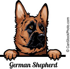 Head German Shepherd Dog - dog breed. Color image of a dogs ...