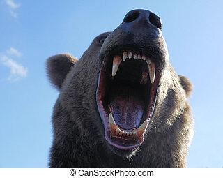 Head of a bear.