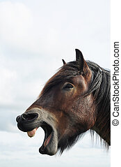 Head of a brabant draft horse with open mouth