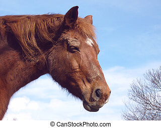 Head of a brown horse