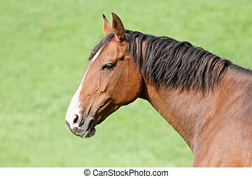 Head of a brown horse isolated against the green background of the meadow