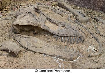 head of a dinosaur fossil