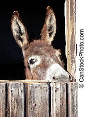 Head of a Donkey behind a stable door