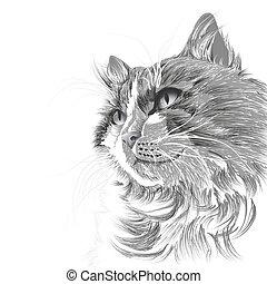 Head of a grey cat