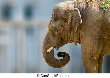 head of a large animal elephant in the zoo