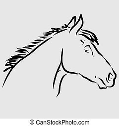 Head of a Lipizzan horse