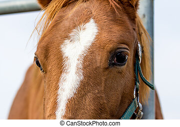 Head of an horse