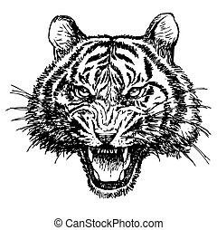 head of angry tiger hand drawn on white background