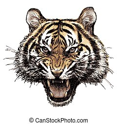 head of angry tiger hand drawn