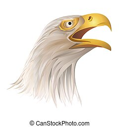 Head of bald eagle isolated on white background.