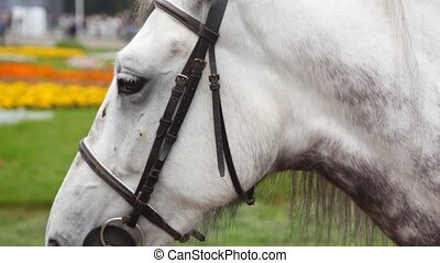 head of black-and-white horsy close up in summer in park
