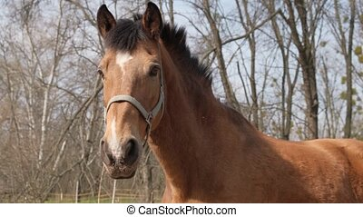Head of brown horse behind iron fence, close-up. Beautiful horse, harness, horse muzzle. Horse waving mane. Oudoor