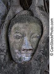 Head of Buddha image in Ayuttaya