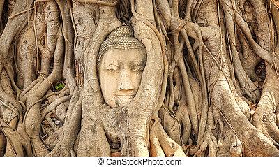 Head of Buddha in Tree Roots at Wat Mahathat, Ayutthaya,...