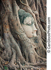 Head of Buddha statue in the tree roots at Wat Mahathat, Ayuttha