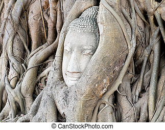 Head of Buddha statue in the tree roots of Wat Mahathat temple, Ayutthaya, Thailand.