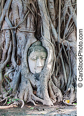 Head of Buddha, with tree trunk and roots growing around it at Wat Mahathat, Ayutthaya. Public temple Thailand.