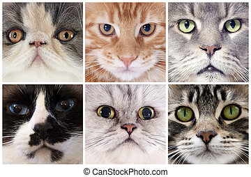 head of cats