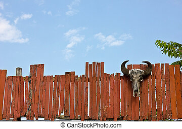 Head of cattle fence and sky.