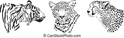 Head of cheetah, leopard and tiger - black and white...
