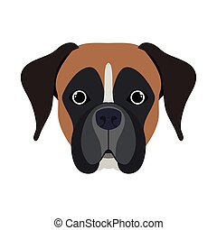 head of cute boxer dog on white background