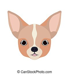 head of cute chihuahua dog on white background