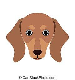 head of cute dachshund dog on white background