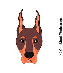 head of cute doberman dog on white background