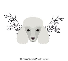 head of cute poodler dog on white background