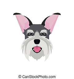 head of cute schnauzer dog on white background