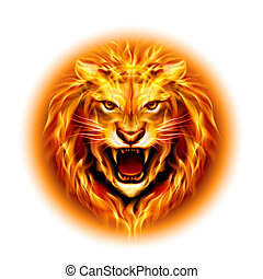 Head of fire lion. - Head of aggressive fire lion isolated...