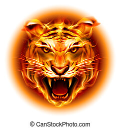 Head of fire tiger - Head of agressive fire tiger isolated ...