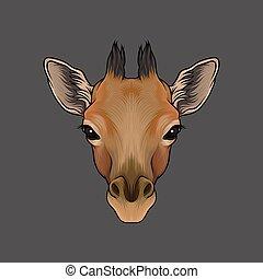 Head of giraffe, portrait of wild animal hand drawn vector Illustration
