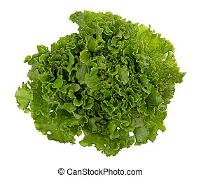 Head of green leaf lettuce on a white background