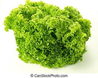 Head of green lettuce