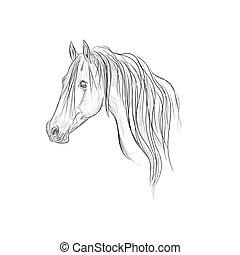 head of horse, sketch style, vector