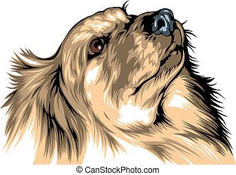 head of labrador
