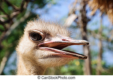 head of ostrich with nature blue background
