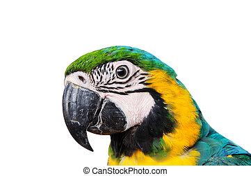 head of Parrot Macaw on white background.