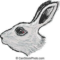 head of rabbit