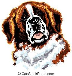 head of saint bernard dog - dog head,saint bernard breed,...