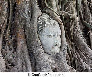 Head of Sandstone Buddha in The Tree Roots at Wat Mahathat,...