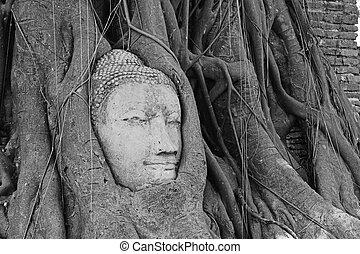 Head of Sandstone Buddha overgrown by Banyan Tree, Ayutthaya historical park, Thailand. After Mega flood in Thailand