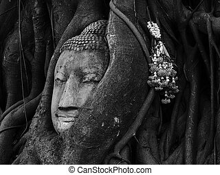 Head of Sandstone Buddha overgrown