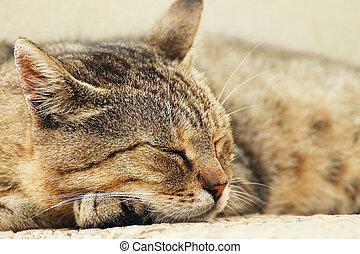 Head of sleeping tabby cat