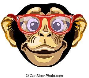 Head of smiling chimpanzee