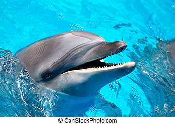 head of the dolphin blue water